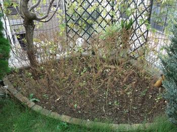 秋の花壇.jpg