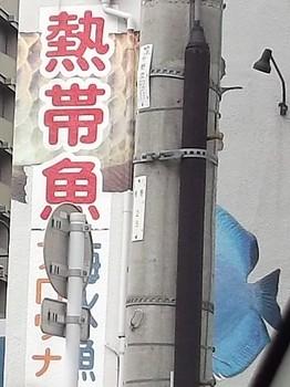 熱帯魚看板.JPG